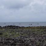 多くの海女船