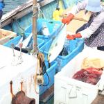 珠洲漁港 ブリ