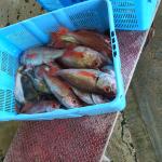 輪島漁港 のどぐろ